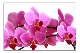 Obrazy orchidey 1324