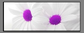 Obrazy květy 1325