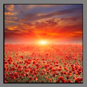 Obrazy západ slunce 1329