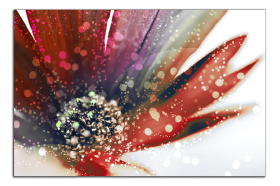Obrazy květy 1330