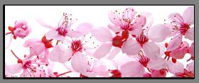 Obrazy květy 1335