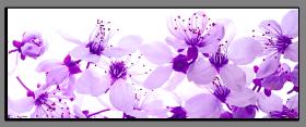 Obrazy květy 1336