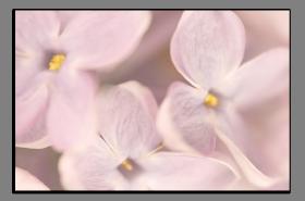 Obrazy květy 1343