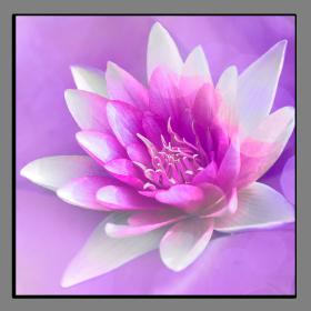 Obrazy různý květy 1347