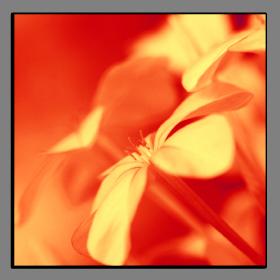 Obrazy květy 1348