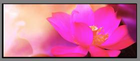 Obrazy různý květy 1351