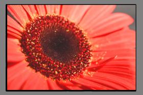 Obrazy květy 1352