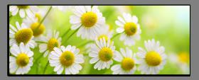 Obrazy harmonie květů 1358