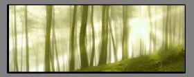 Obrazy stromy 1361