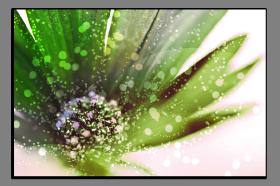 Obrazy květy 1366