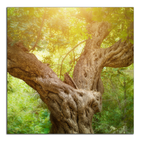 Obrazy stromy 1370