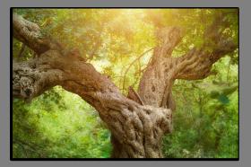 Obrazy stromy 1372