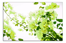 Obrazy květy 1373