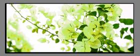 Obrazy květy 1374