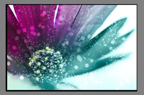 Obrazy květy 1382