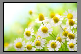 Obrazy květy 1395
