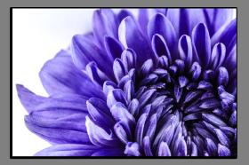 Obrazy květy 1397