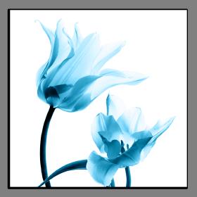 Obrazy tulipány 1398