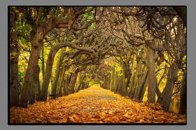 Obrazy stromy 1401