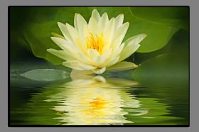 Obrazy různý květy 1415