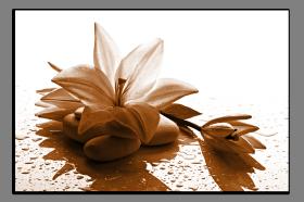 Obrazy květy 1441