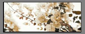 Obrazy květy 1444