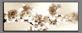 Obrazy květy 1452