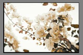 Obrazy květy 1467