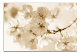 Obrazy květy 1482
