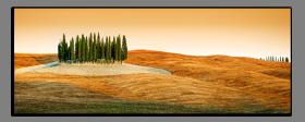 Obrazy stromy 1487