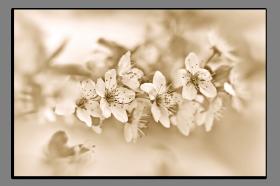 Obrazy květy 1492