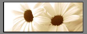 Obrazy květy 1498