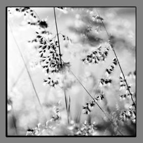Obrazy čistě černobílý 2017