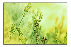 Obrazy harmonie květů 2019