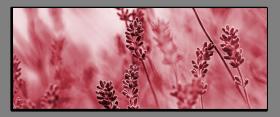 Obrazy harmonie květů 2020