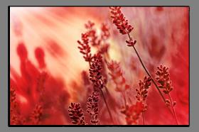 Obrazy harmonie květů 2024