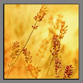 Obrazy harmonie květů 2025