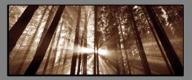 Obrazy stromy 2030
