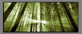 Obrazy stromy 2038
