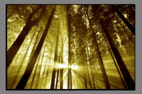 Obrazy stromy 2040