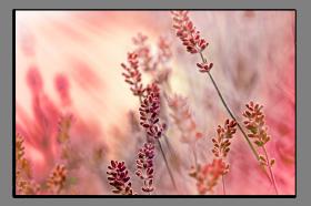 Obrazy harmonie květů 2041