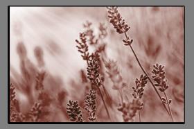 Obrazy harmonie květů 2046