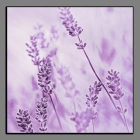 Obrazy harmonie květů 2059