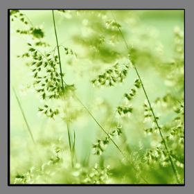 Obrazy harmonie květů 2060