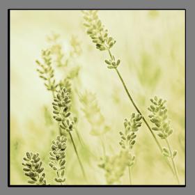 Obrazy harmonie květů 2062