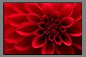 Obrazy květy 2069