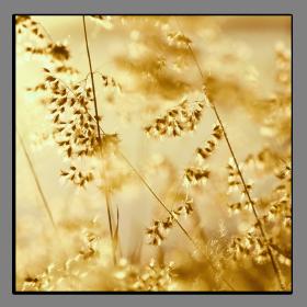 Obrazy detaily přírody 2072