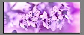 Obrazy květy 2073