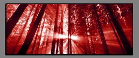Obrazy stromy 2074