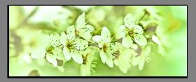 Obrazy květy 2082